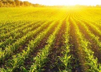 Fertilizer Industries